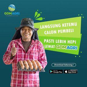 download gdm agri